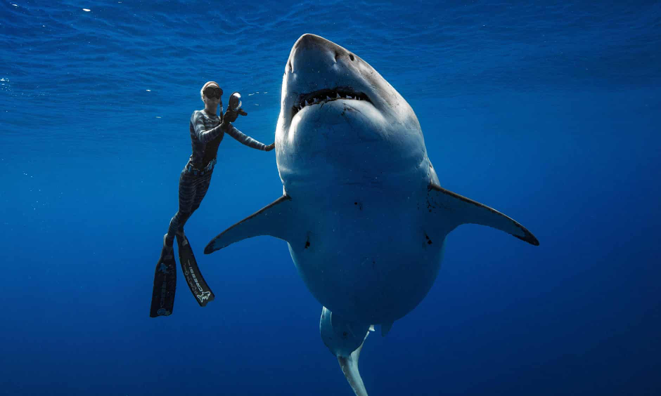 f16803448855 Divers get up close and personal with largest great white shark ...